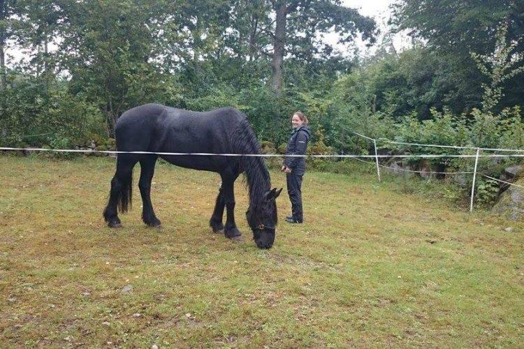 Tjej i hage med häst