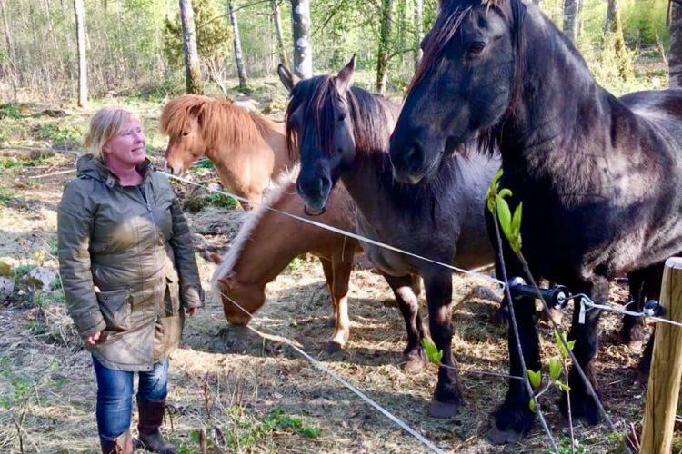 Anki med tre stycken hästar