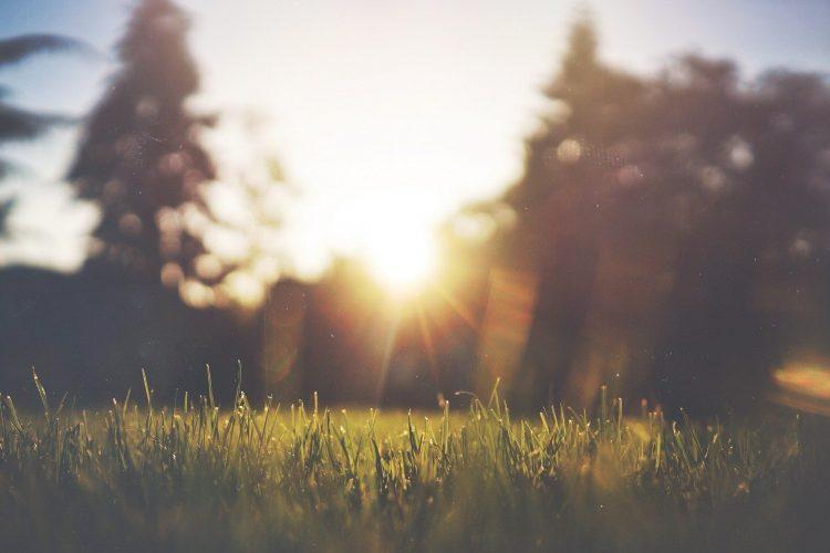bild tagen i gräset mot solen