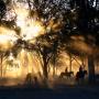 Grupp med hästar som rids i solnedgången